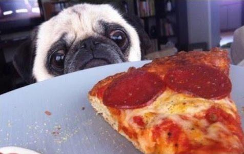 This pug is sad because he wanted ham on his pizza, not pepperoni! This proves our point - how can you please everyone?